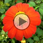 A la découverte des jardins colorés de Claude Monet
