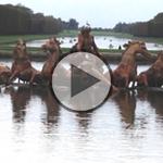 A walk in Versailles gardens